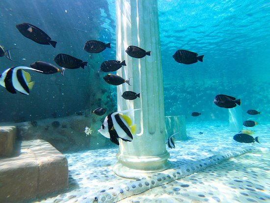 Turkler, Turcja: Tropical Reef