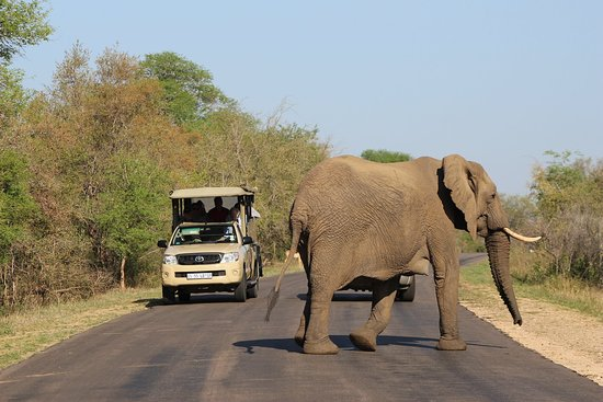 Vomba Tours & Safaris