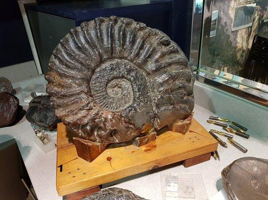museo Nautilus