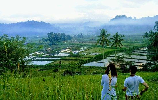 Amed Private Tour Drivers: Bukit cinta rice field view at Gelumpang village