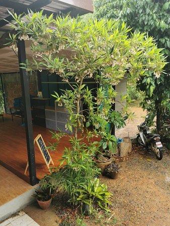 บ้านสวนหนานทองคำ คอฟฟี่แอนด์รีสอร์ท ภาพถ่าย