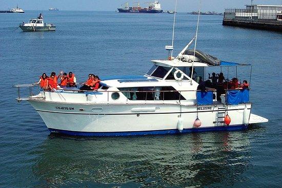 Svømming med Sea Lions Yacht Tour