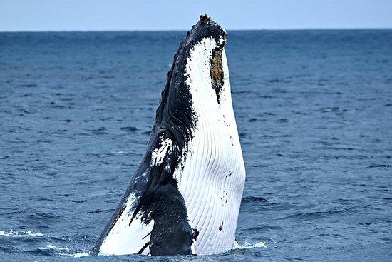 奥古斯塔或珀斯的观鲸之旅,可选的船长休息室升级