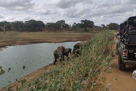 ディクウェラのヤラ国立公園プライベートサファリ