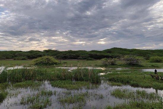 ゴールのバンダラ国立公園プライベートサファリ