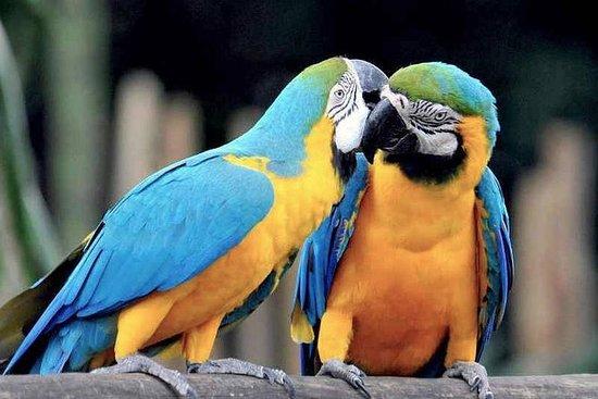 Tambopata Chuncho Macaw Clay Lick 3