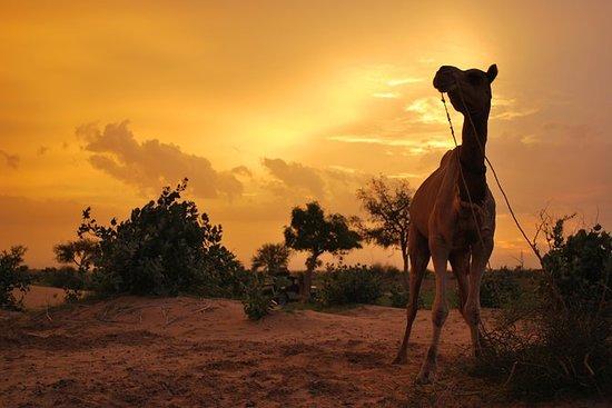 OVERNIGHT CAMEL SAFARI (FJÄRR OCH ...
