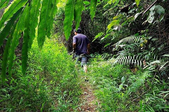 Experiencia de la Selva Khao Lak
