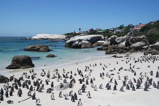 PRIVAT TOUR, Cape Point Peninsula...