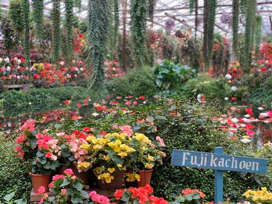 Fuji Kachoen