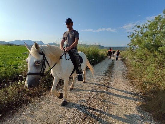 Horse Riding Alonaki