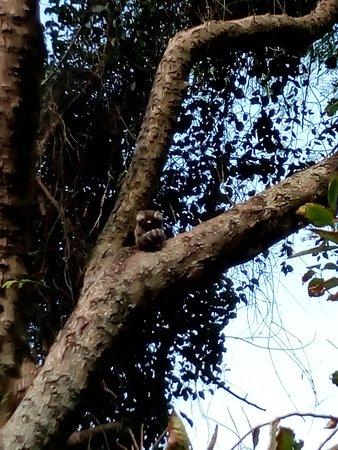 Claudio Coutinho Trail (Rio de Janeiro) - 2019 All You Need