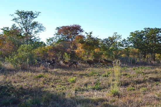 Pandamatenga, Botswana: game viewer