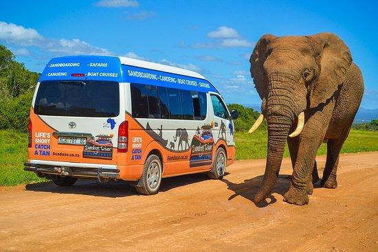 Heldagsafari i Addo Elephant National...