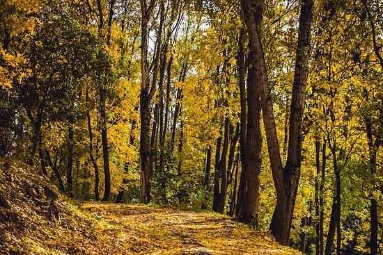 Minneverdig Jeju Autumn Foliage Random...
