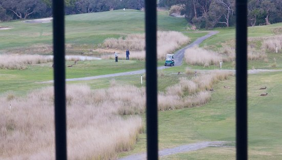 The Range Restaurant: Golfers and Kangaroos share the greens