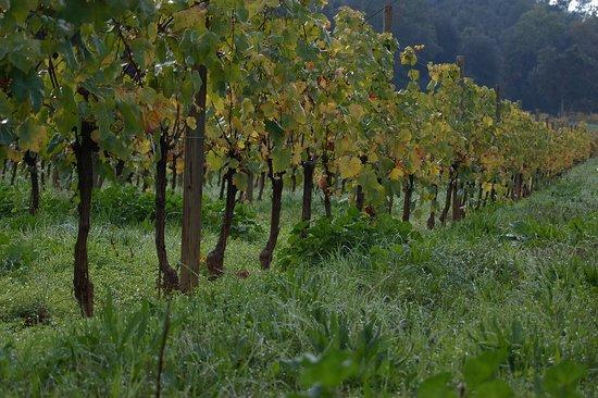Sant Marti Vell, สเปน: Les vinyes de Sant Martí Vell