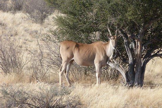 Mariental, Namibia: Abituali avvistamenti nei parchi namibiani
