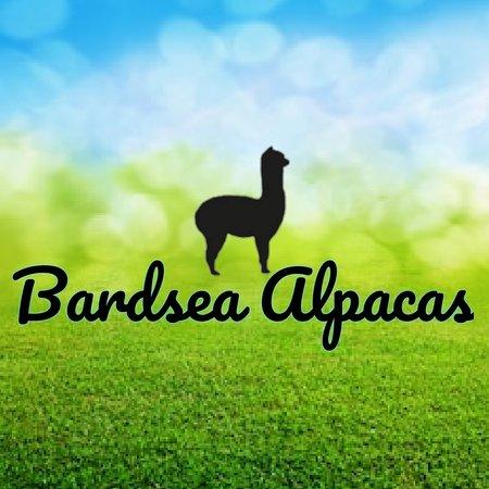 Bardsea Alpacas