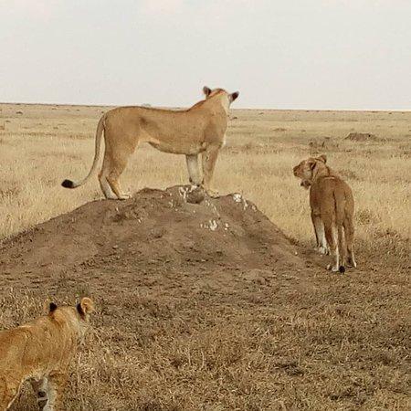 Lomo Tanzania Safari
