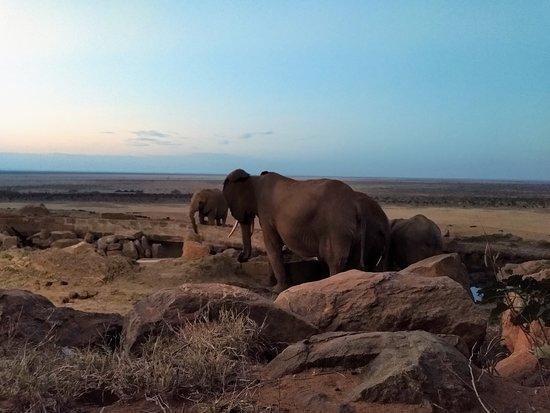 Kenya Tour Budget Safari (Rift Valley Province) - Book in