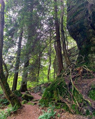 Chautauqua County, NY: Panama Rocks