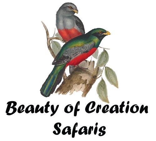 Beauty of Creation Tours & Safaris