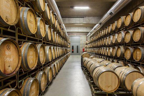 Aldeia Galega da Merceana and Aldeia Gavinha, Portugalia: Após um meticuloso processo de vinificação, os  vinhos de Chocapalha passam para uma das fases finais: o estagio em barrica. Tendo maioritariamente barricas de carvalho francês a nossa sala de barricas é um dos tesouros de Chocapalha. Visite-nos e saiba mais sobre o nosso processo de vinificação