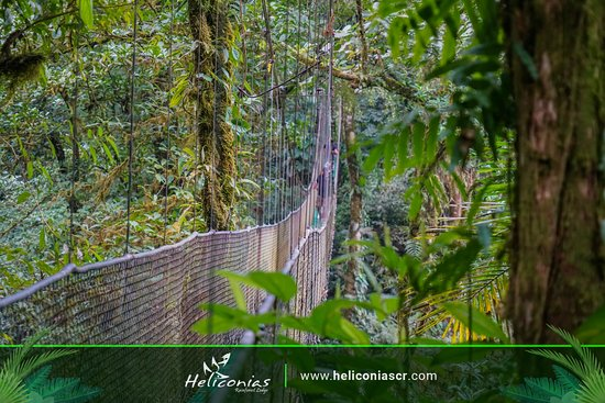 Heliconias Hanging Bridges Trails