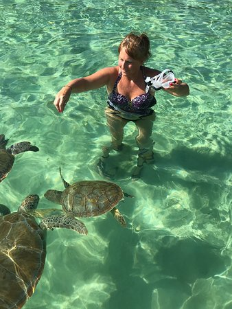 Fun day with turtles and pigs!