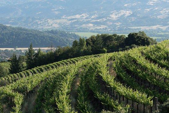 Healdsburg, CA: Hillside Topel Estate Vineyard