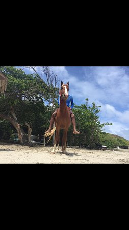 Cas En Bas, Santa Lucía: Pegasus