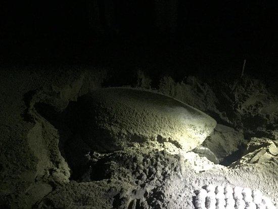 Sarongan, Indonesia: Turtle beach