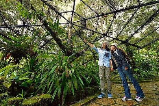 Kinabalu Park Canopy Walkway and...