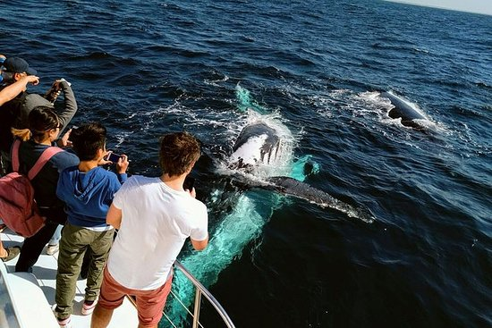Meio dia de observação de baleias e...