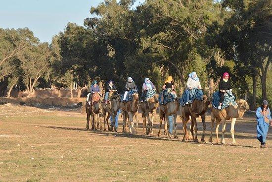 在阿加迪爾騎駱駝和燒烤