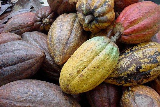Escursione al sentiero del cacao