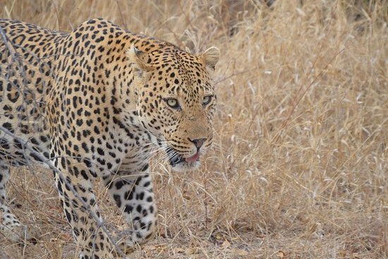 6-daagse Kruger National Park Safari ...