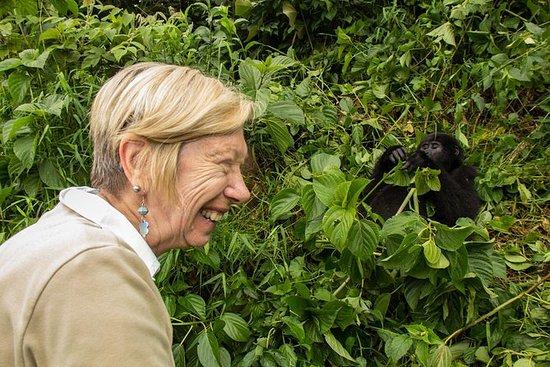 5 días de seguimiento de gorilas en...