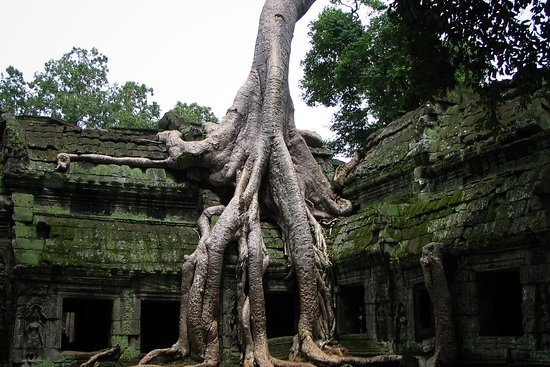 Angkor Family Guide