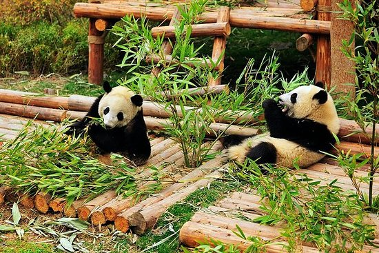Dujiangyan Panda Rescue Center...