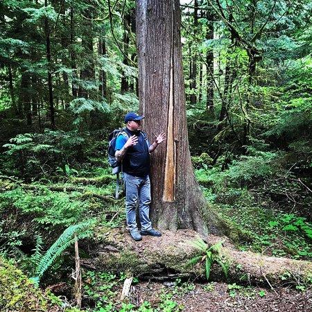 Port Clements, Kanada: Examining a Culturally Modified Tree