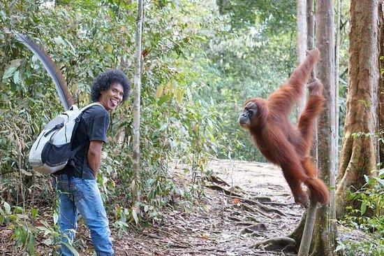 Ronie's Junlge trek Bukit Lawang