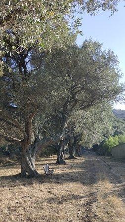 Avapessa 사진