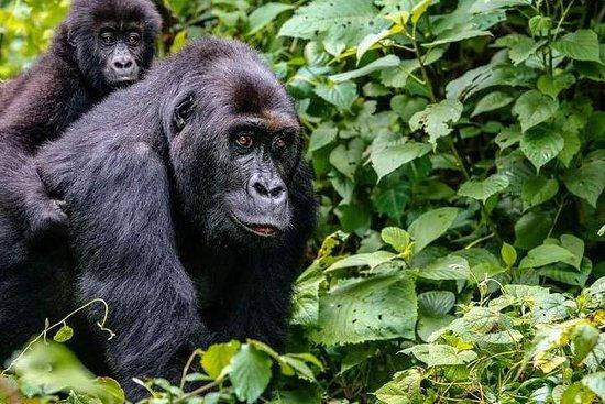 Dark Hills Uganda