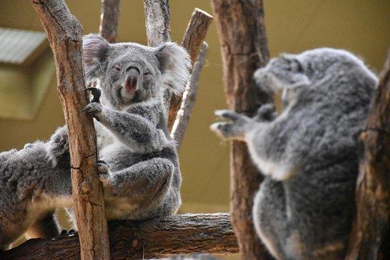 东山动植物园