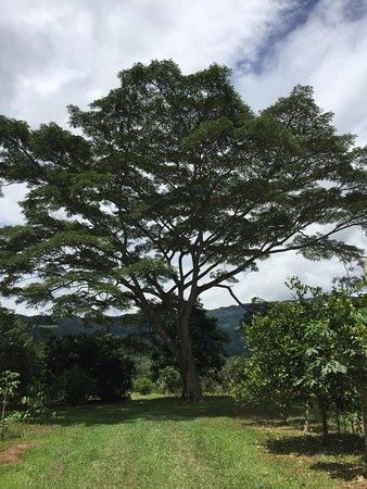 Canoabito, Venezuela: Excelente sitio, un plan de domingo interesante y sin duda, delicioso
