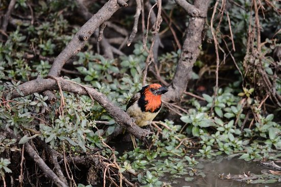 Mkuze Game Reserve – fotografija