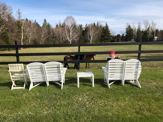Bay Fortune, Kanada: Lavender Stables Horse Paddock
