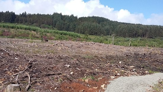 Whiting Bay, UK: Trees felled just passed the bridge by the picnic bench near the top of the falls.